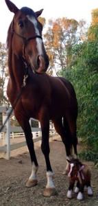 Billie Horse and her Cuddle Clone